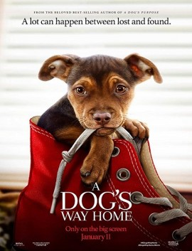فيلم A Dogs Way Home 2019 مترجم