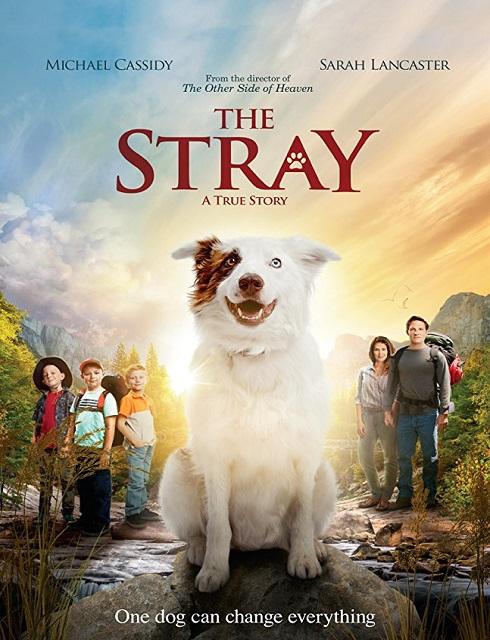 فيلم الدراما The Stray 2017 مترجم